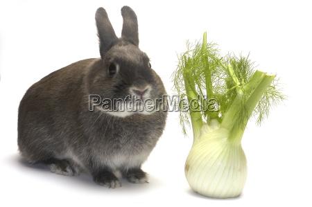 portraet eines kaninchens und seines lieblingsgemueses