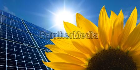 solar panels and sunflower against sunny