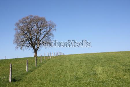tree horizon radio silence quietness silence