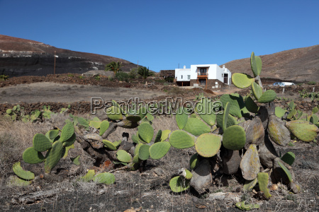 cactus in front of traditional house