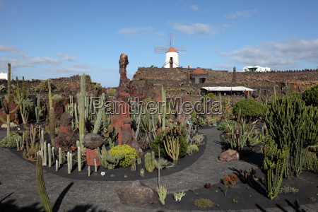cactus garden jardin de cactus
