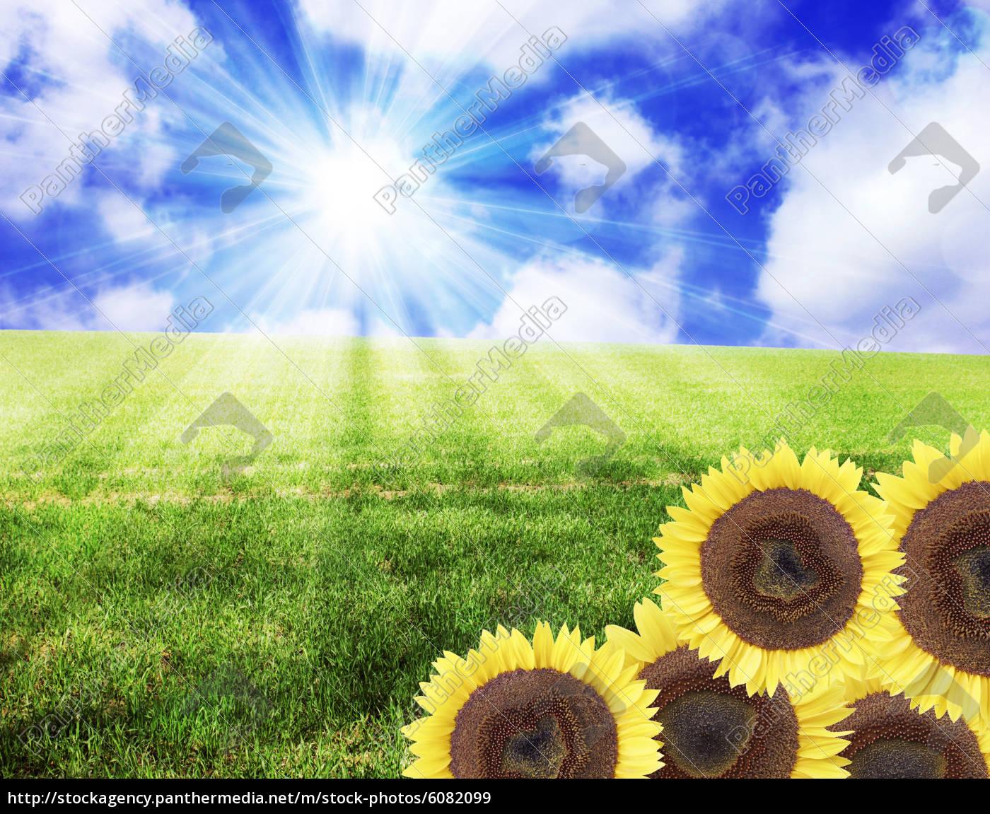 landschaft natur sonnenblumen symbol - Lizenzfreies Bild - #6082099 ...