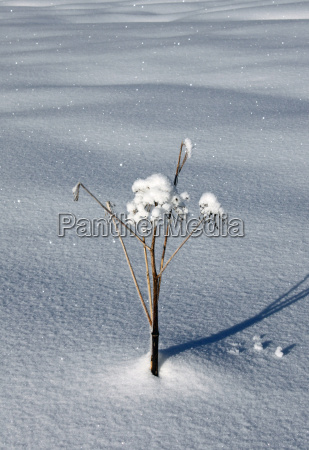 winter snowy ice snowflakes wintry snow