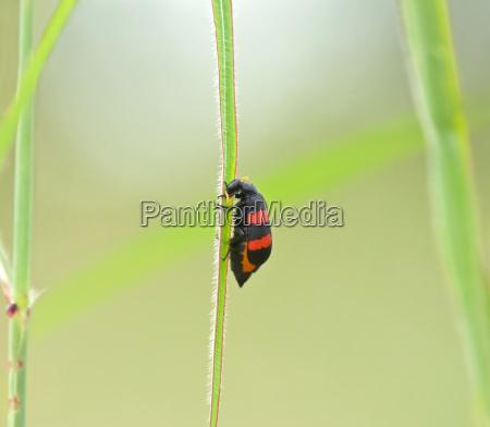 insekt afrika wildlife gambia natur