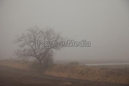 fog over fields