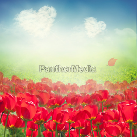 tulip field with heart clouds