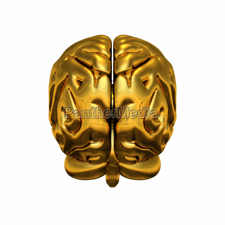 gold brain rueckansicht