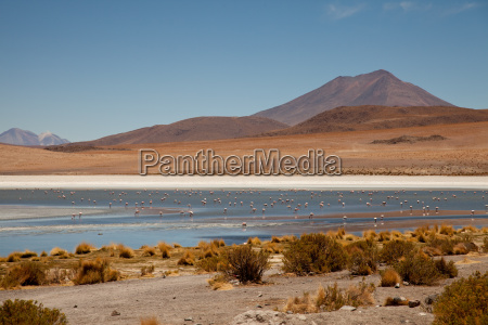 lagoon in andes bolivia