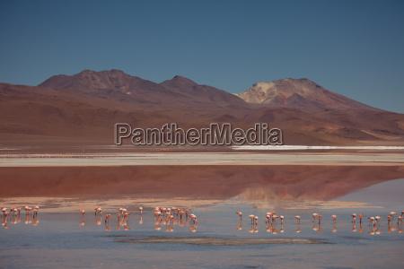 laguna colorada bolivia andean highlands