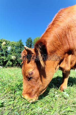 braun braeunlich bruenett landwirtschaft ackerbau braune