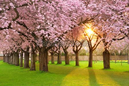 faszinierende fruehlingsszene bei abendsonne