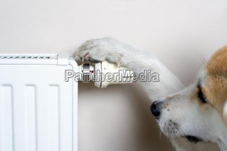 dog einstellung komforttemperatur am kuehler