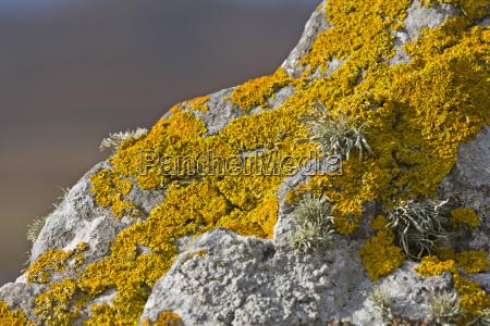 yellow lichen on stone