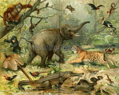 verschiedene wilde tiere suedostasien
