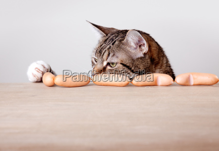 katze und wuerstchen