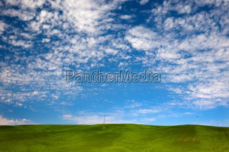 green wheat grass blue skies palouse