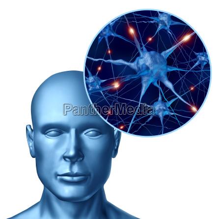 die menschliche intelligenz mit aktiven neuronen
