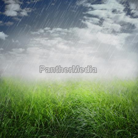 spring rainy background