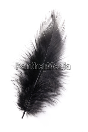 vogel tragflaeche fluegel flaum flaumfeder weichheit