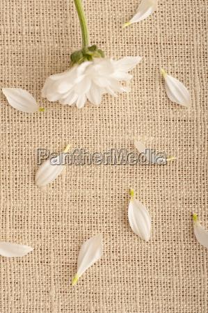 a white flower on linen