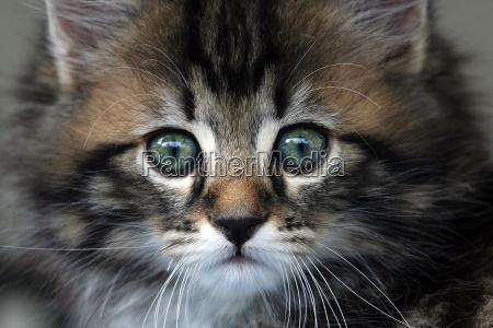 a sweet little kitten
