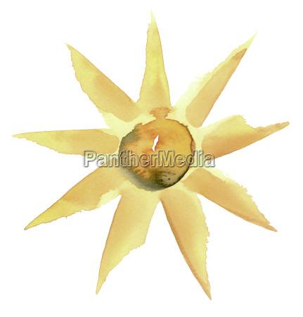 sunny flower illustration
