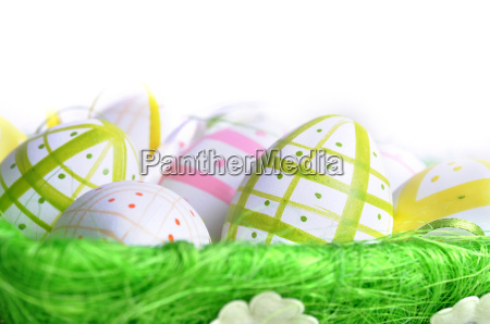 isolated flower flowers plant easter spring