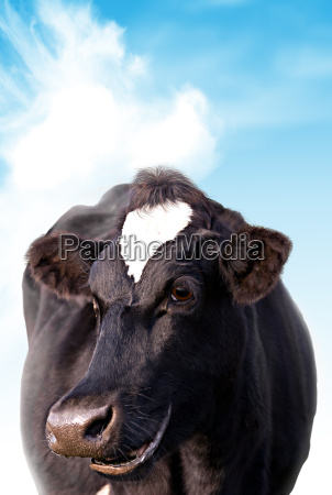 glueckliche kuh