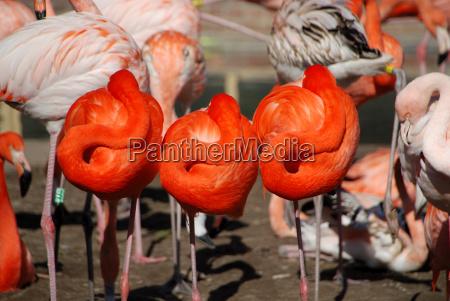drei flamingos