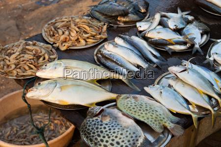 fischmarkt in kerala indien