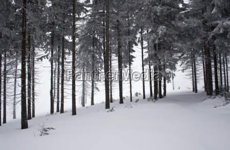 polish mountains during winter