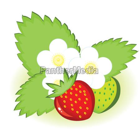 reife erdbeeren und gruen mit blumen