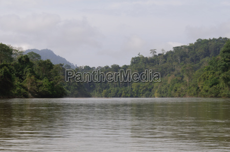 dschungel regenwald