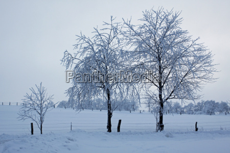 diesige winterlandschaft