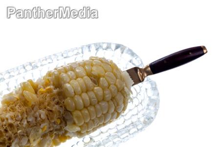 freisteller korn teller abgeschieden hungrig mais