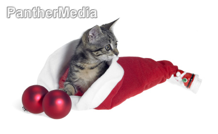 christmas cat in red jelly bag