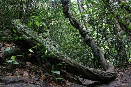 frische dschungel tropische tropisch landschaftsbild landschaft