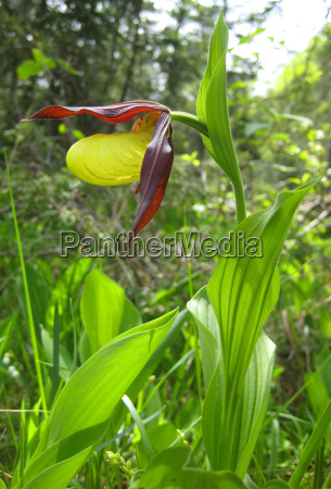 conservation of nature flora flower orchid