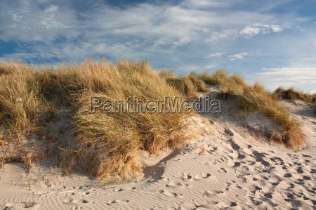 dunes on the baltic sea near