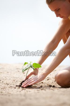 anbau von pflanzen