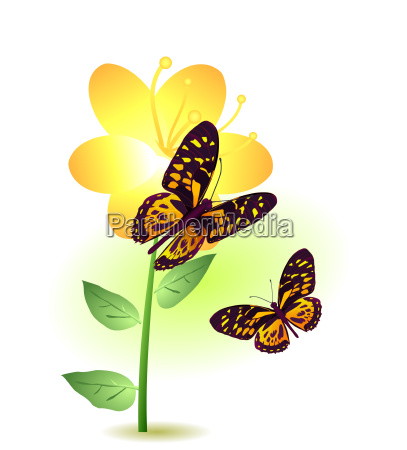 flower with two butterflies