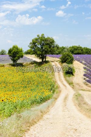 europa frankreich lavendel provence