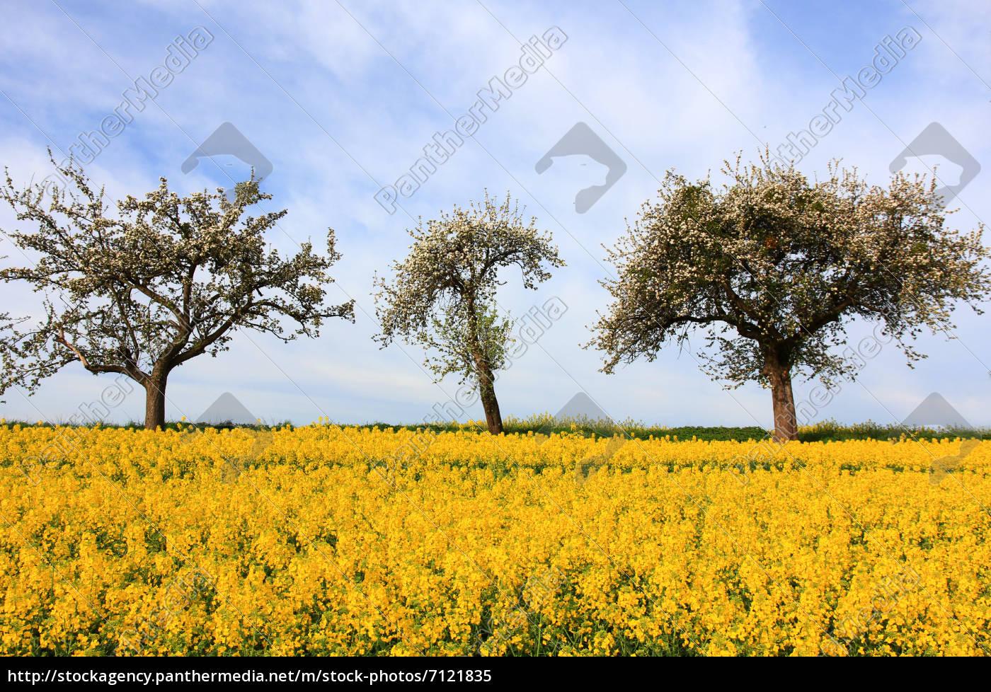 natur himmel landschaft baum gelb wolken fr hling b ume stockfoto 7121835 bildagentur. Black Bedroom Furniture Sets. Home Design Ideas