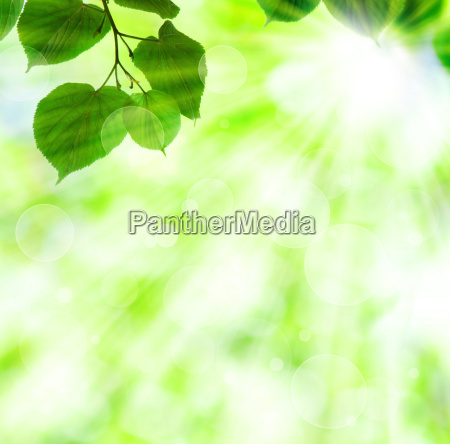 fruehlingssonne strahl mit gruenen blaettern