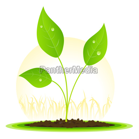 plant seed growth