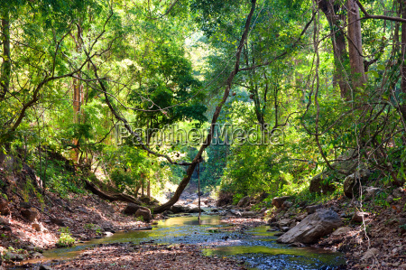 river, through, the, forest - 7410191
