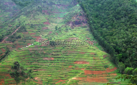 border of the bwindi impenetrable forest