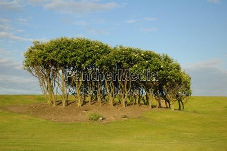 gruener busch mit blauem himmel