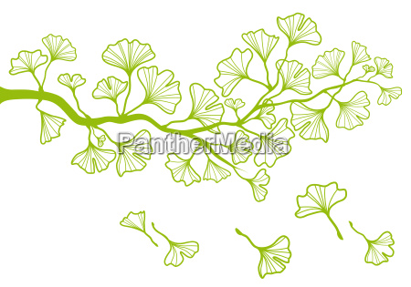 ginkgo branch with leaves vector
