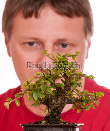man does look a bonsai tree